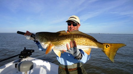 Beautiful Redfish for Lee or Tom!